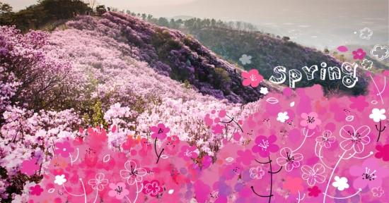 [꽃과 선거]참꽃과 개꽃 관련이미지1
