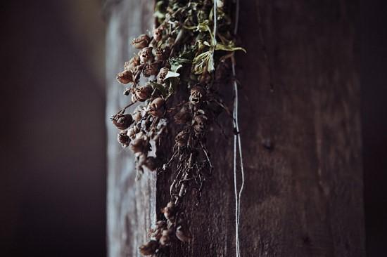 [꽃과 선거] 금어초의 반전 관련이미지3